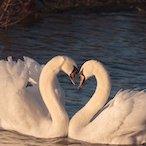 tantra_couples_workshop